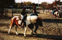 Pony open space photograph